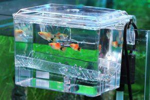 incubadora para huevos de peces